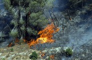 Maintaining Forests to Prevent Fires
