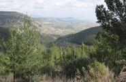 Naftali Mountains Forest in the Golan Heights